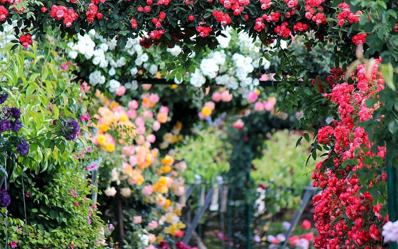 raj v záhrade